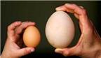 Bà bầu ăn trứng ngỗng con sẽ thông minh?