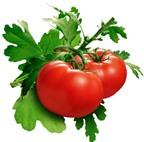 Dưỡng trắng da mùa hè với cà chua