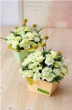 Cắm hoa cẩm chướng với hộp giấy thật đẹp