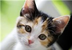Những khả năng khó lý giải của vật nuôi