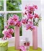 Bảo quản nước hoa đúng cách