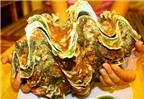 3 món ăn ngon từ ốc tai tượng