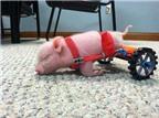 7 động vật khuyết tật nổi tiếng