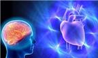 Trái tim cũng có trí thông minh?