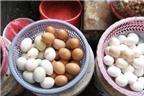 Trứng từ gà nhiễm kháng sinh - mầm mống ung thư