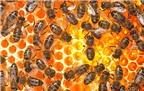 Mật ong nguyên chất và tác dụng với sức khỏe