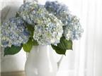Những kiểu cắm hoa cẩm tú cầu thật đẹp