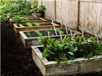 Nhờ chồng yêu 'đóng giường' trồng rau độc đáo
