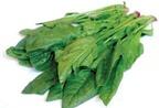 Tác dụng của cây cải bó xôi