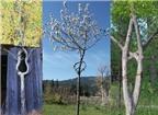 Tạo hình cây thành tác phẩm nghệ thuật