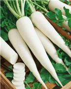 Củ cải trắng chữa bệnh