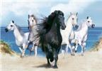 Những bí mật thú vị về loài ngựa