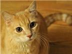 Vết mèo cắn dễ gây nhiễm trùng