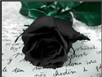 Độc đáo hoa hồng đen