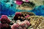 Top 10 điểm lặn biển ấn tượng nhất thế giới