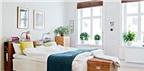 Lưu ý phong thủy khi đặt cây xanh trong phòng ngủ