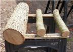 Trồng nấm hương thơm ngon trên gỗ