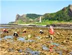 Mùa đặc sản biển Lý Sơn