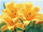 Bổ thận, đẹp da với canh hoa