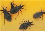 Cách đơn giản phòng chống bọ xít hút máu