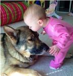 Nuôi chó trong nhà có dễ gây bệnh sán chó