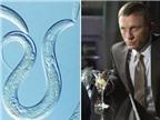Anh chế tạo thuốc giúp chống say rượu như của điệp viên 007