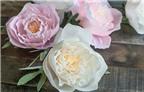 Cách làm hoa mẫu đơn giấy đẹp như hoa thật