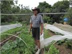 Bí quyết trồng bí lấy đọt thu lãi tiền triệu
