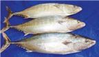 Độc đáo cá ngừ thu '2 vị ngon'