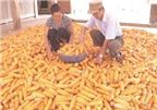 Nghịch dị xuất gạo giá rẻ, nhập thức ăn gia súc đắt