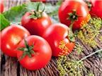 8 lợi ích làm đẹp tuyệt vời từ cà chua