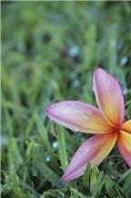 Cách chụp ảnh hoa cho người mới bắt đầu