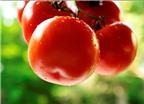 Ăn cà chua đúng cách để giảm cân