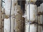 Kinh nghiệm chọn nấm chất lượng