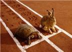Bài học giản dị từ Thỏ con và Rùa con