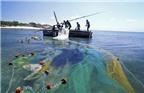 Độ ngon của cá phụ thuộc cách... đánh bắt