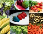 Thực phẩm chuyển gen và những điều còn tranh cãi