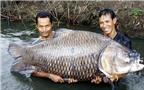 """Kỳ II: Loài cá """"khôn 3 năm, dại 1 giờ"""" và gã thợ câu với """"căn bệnh giời đày"""""""