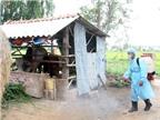 Phòng chống bệnh truyền nhiễm, dịch bệnh phát sinh sau bão