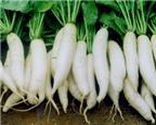 6 thực phẩm giảm cân tuyệt vời cho mùa Thu