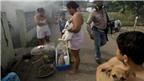 Chikungunya đau nhức dữ dội