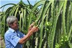 Trái cây Việt, làm gì để tới mùa không rớt giá?