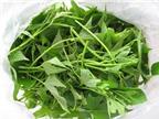 Tác dụng chữa bệnh của rau khoai lang