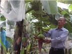 Tự tạo cơ hội - Kỳ 80: Trồng chuối sạch thành tỉ phú