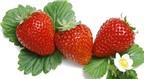10 thực phẩm giúp giảm mỡ bụng
