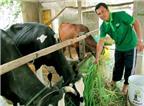 Tự tạo cơ hội - Kỳ 81: Làm giàu từ một con bò sữa