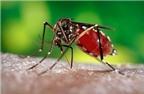 Giải pháp khả thi phòng chống sốt xuất huyết