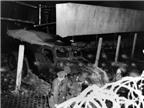 10 vụ đào tẩu nổi tiếng quanh Bức tường Berlin