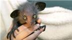 8 loài vật xấu xí trước nguy cơ tuyệt chủng