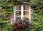 Bài trí cửa sổ và những điều cần tránh